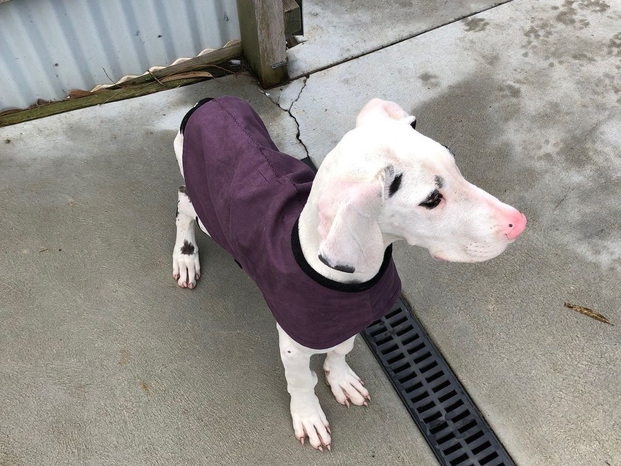 Lost and Found Animals | Bass Coast Shire